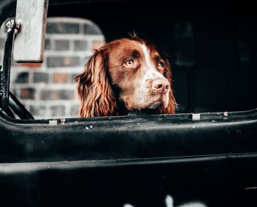 f-say-yes-to-the-world-dog-inside-vehicle-in-london