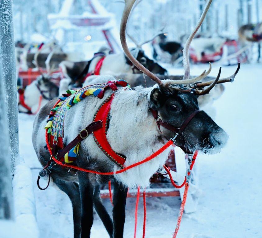 1-santa-claus-reindeers